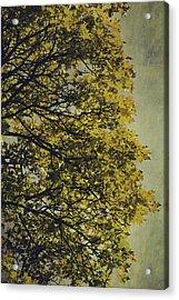 Acrylic Print featuring the photograph Autumn Glory by Ari Salmela