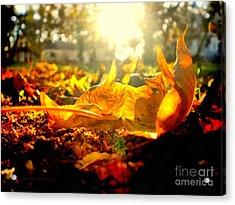 Autumn Glory Acrylic Print by Janine Riley