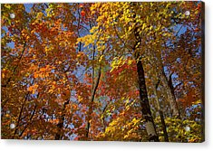 Autumn Glory Acrylic Print by Larry Bohlin