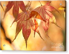 Autumn Glow Acrylic Print by Anne Gilbert