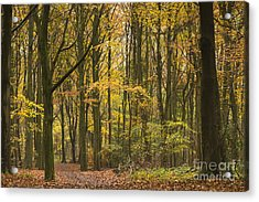 Autumn Gold Acrylic Print by Anne Gilbert