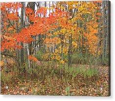 Autumn Golds Acrylic Print by Margaret McDermott
