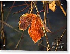Autumn Grape Leaf Acrylic Print