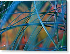 Autumn Grass Acrylic Print by Rebeka Dove