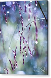 Autumn Grasses Acrylic Print by Amy Porter