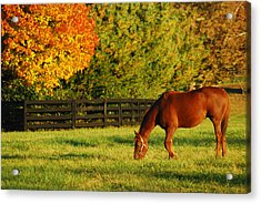 Acrylic Print featuring the photograph Autumn Grazing by James Kirkikis