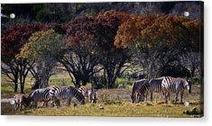 Autumn Grazing Acrylic Print