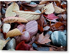 Acrylic Print featuring the photograph Autumn Greatness by Gwyn Newcombe