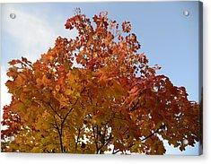Autumn Harmony 1 Acrylic Print