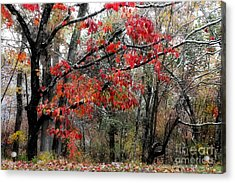 Autumn Harmony Acrylic Print by Michael Eingle