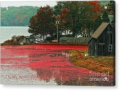 Acrylic Print featuring the photograph Autumn Harvest by Gina Cormier