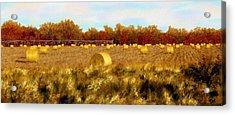 Autumn Hay Acrylic Print