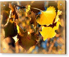 Autumn Hearts Acrylic Print by Lisa Holland-Gillem