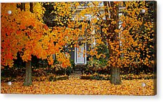 Autumn Homecoming Acrylic Print