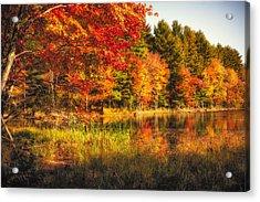 Autumn Hot Mess Acrylic Print by Robert Clifford