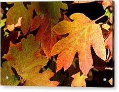 Autumn Hues Acrylic Print by Living Color Photography Lorraine Lynch