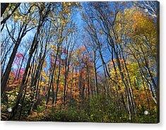Autumn IIi Acrylic Print