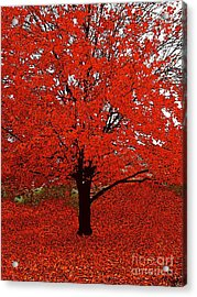 Red Tree Impressions #1 Red Acrylic Print