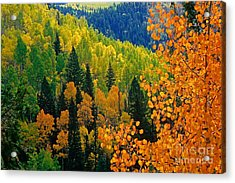 Autumn In Colorado Acrylic Print by Richard and Ellen Thane