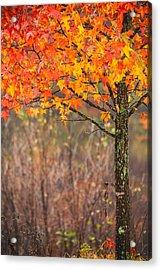 Autumn In Connecticut Acrylic Print