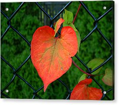 Autumn In July Acrylic Print by RC deWinter