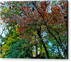 Autumn In Raleigh 009 Acrylic Print by Lance Vaughn