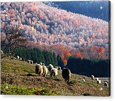 Autumn In Romanian Mountains Acrylic Print
