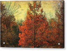 Autumn In Texas Acrylic Print