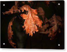 Autumn Is In The Air Acrylic Print