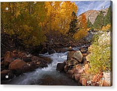 Autumn In The Eastern Sierra Acrylic Print