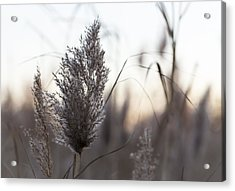 Acrylic Print featuring the photograph Autumn In The Tall Grass by Andrew Pacheco