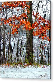 Autumn In Winter Acrylic Print by Julie Dant