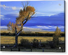 Autumn In Wyoming Acrylic Print