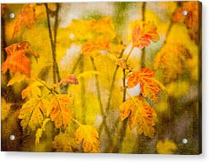 Autumn In Yellow Acrylic Print by Alexander Senin