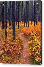 Autumn In Yellowstone Acrylic Print