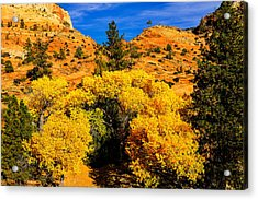 Autumn In Zion Acrylic Print by Greg Norrell