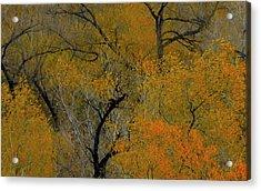 Autumn Intrigue Acrylic Print