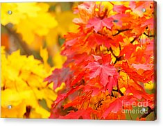 Autumn Is Beautiful Acrylic Print