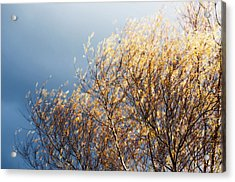 Acrylic Print featuring the photograph Autumn Is Leaving by Gwyn Newcombe