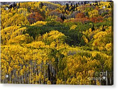 Autumn Kaleidoscope Acrylic Print