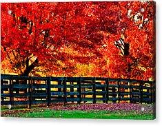 Autumn Kentucky Maples Acrylic Print