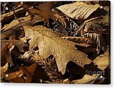 Autumn Leaf At Dawn Acrylic Print