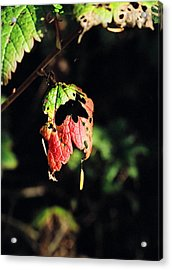 Acrylic Print featuring the photograph Autumn Leaf by Cathy Mahnke