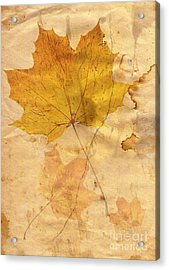 Autumn Leaf In Grunge Style Acrylic Print by Michal Boubin