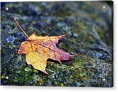 Autumn Leaf On Rocky Ledge Acrylic Print by Terri Gostola