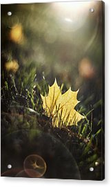 Autumn Leaf Sunset Acrylic Print by Scott Norris