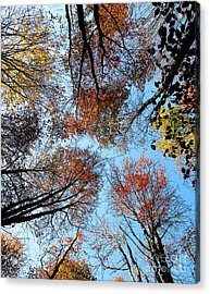 Autumn Leaves 2011 Season Acrylic Print by Tina M Wenger