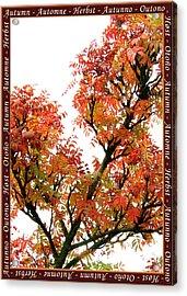 Autumn Leaves 3 Acrylic Print