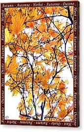 Autumn Leaves 4 Acrylic Print
