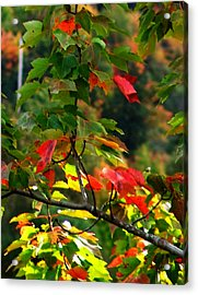 Autumn Leaves At St. Ann's Bay Acrylic Print by Janet Ashworth